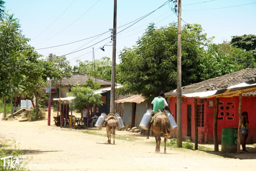 Palenque tour. Horses in the village