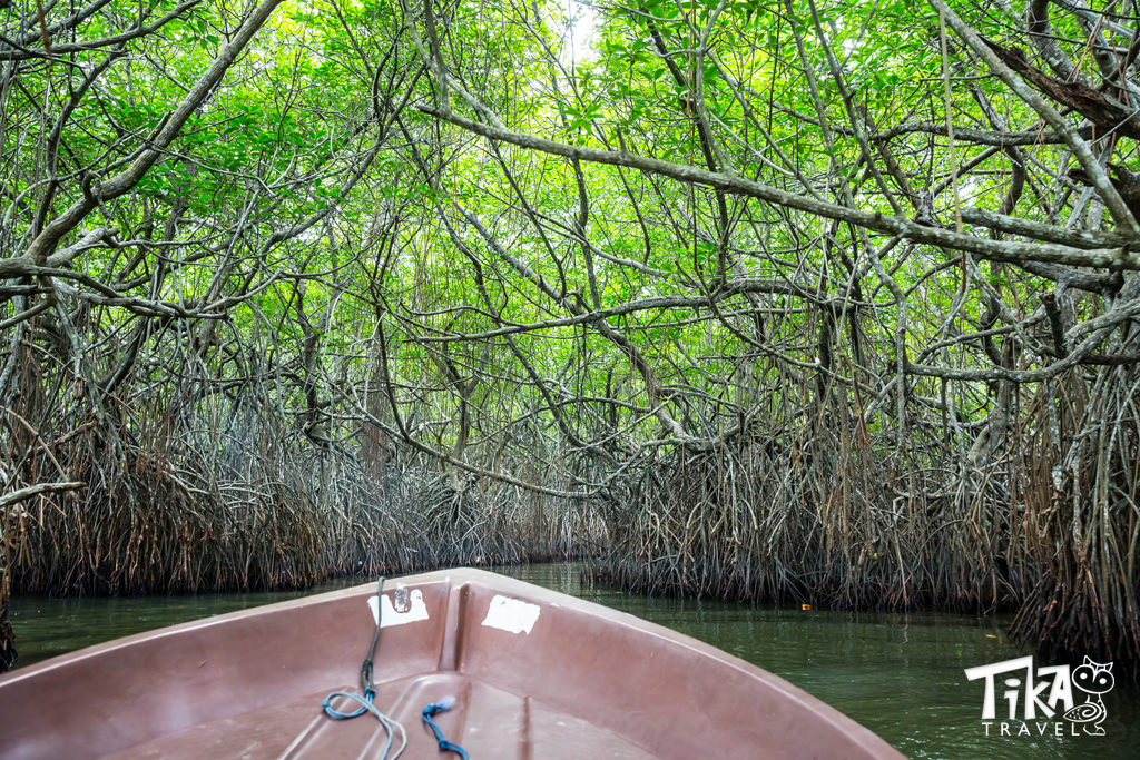 Canoe Mangroves Eco tours Cartagena COlombia